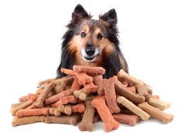 cane con biscotti