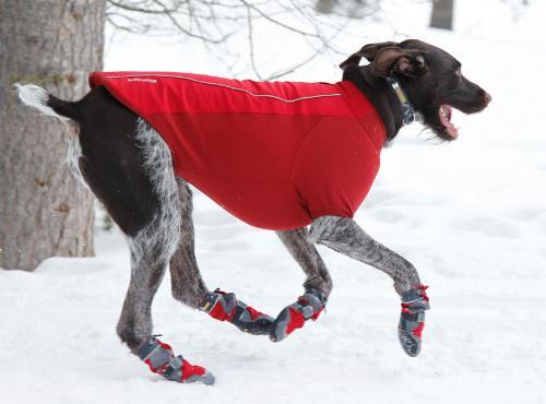 cane corre nella neve