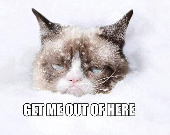 grumpy cat no alla neve