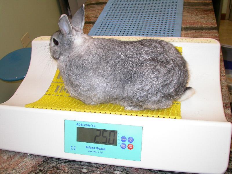Per pesare i conigli si deve usare una bilancia per neonati