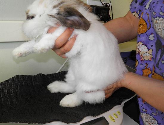 coniglio presa1