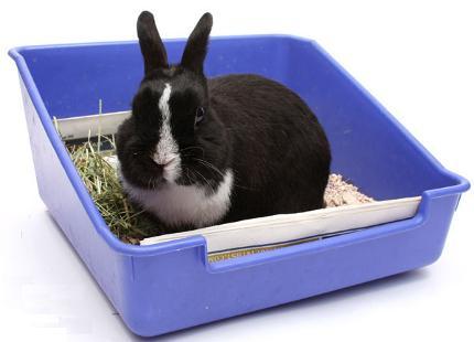 coniglio cassetta1