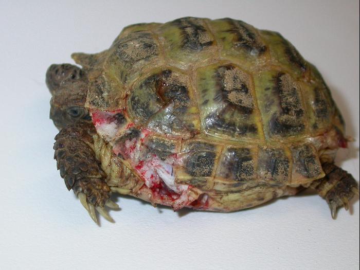 Il cane non il miglior amico delle tartarughe pets vets for Miglior filtro esterno per tartarughe
