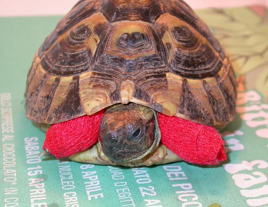 Topi e ratti un pericolo per le tartarughe pets vets for Tutto per le tartarughe