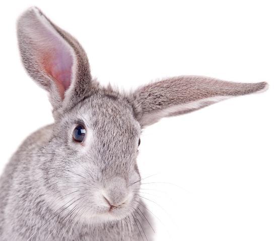 5 sensi coniglio
