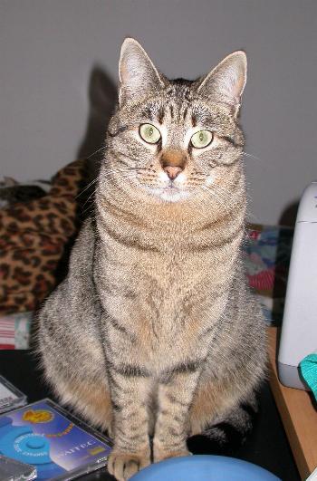 Una delle mie gatte ha superato la veneranda età di 20 anni