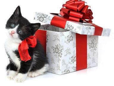 Perchè non regalare animali