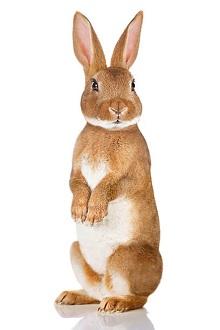 Molte medicine sono tossiche nel coniglio
