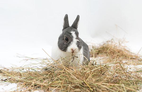 coniglio fieno