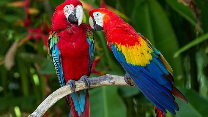 pappagalli felici