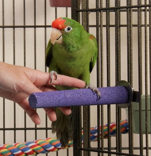 pappagallo sulla mano
