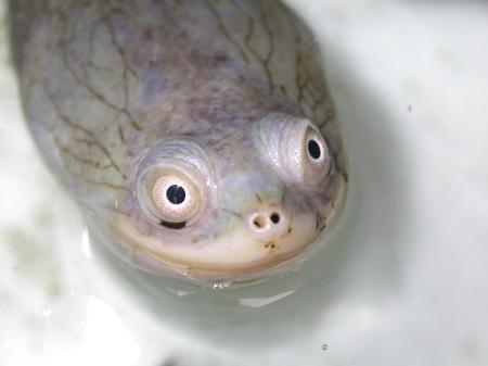 occhi tartaruga