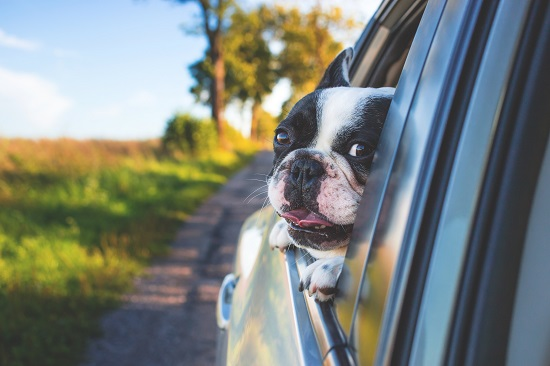 mal di macchina nei cani