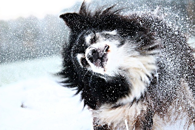 I cani e la neve