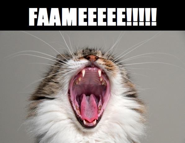 ossessione cibo gatto