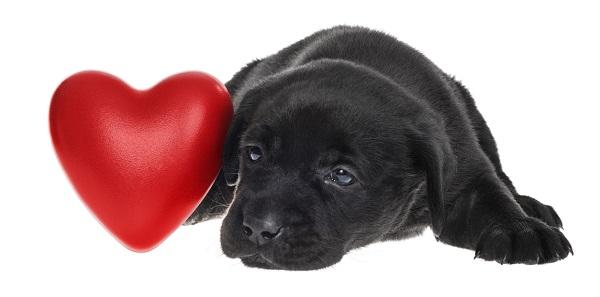 come mantenere sano il cuore del cane