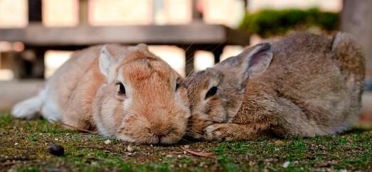 coniglio perdita compagno