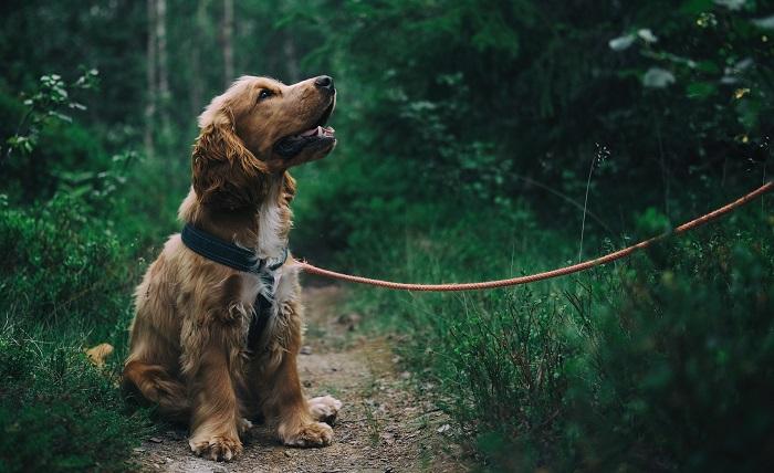 cane passeggiata