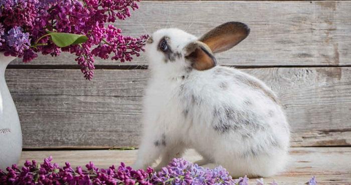 pericolo conigli