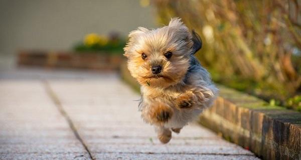 perchè il cane scappa